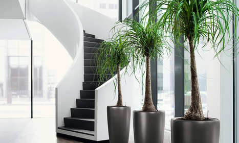 Use Indoor plants for A Breath of Fresh Air | Foliage Indoor Plant Hire | Scoop.it
