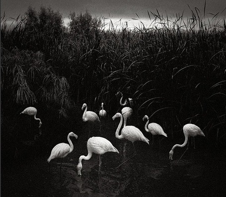 World of wonder: Pentti Sammallahti's black and white photography – in pictures | Master Photographers | Scoop.it