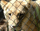 Ban the Sale of British Zoo Animals to Foreign Circuses ! PL - Care2 | Rhino poaching | Scoop.it