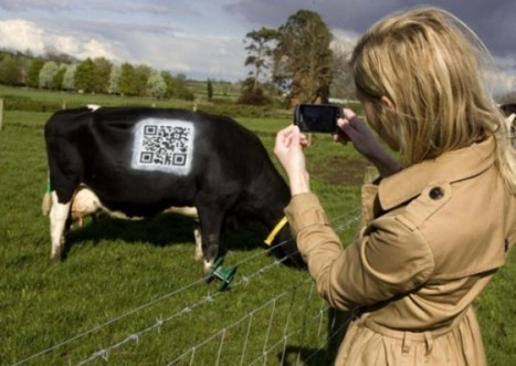 Overly Optimistic Farmers Paint QR Code on a Cow to Raise ... - Geekosystem | scan me to know me | Scoop.it