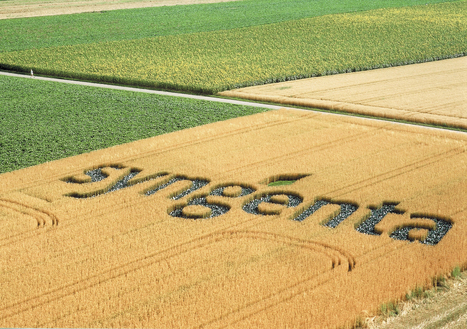 Syngenta Agrees to Chinese Takeover | Grain du Coteau : News ( corn maize ethanol DDG soybean soymeal wheat livestock beef pigs canadian dollar) | Scoop.it