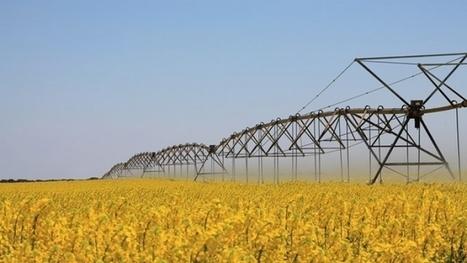Cae la siembra de colza un 8% en Francia mientras que la producción puede descender un 15% ante la mala climatológia | Cultivos | Scoop.it