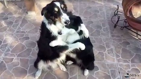 Dog Best Buds Want You to Hug It Out   This Gives Me Hope   Scoop.it
