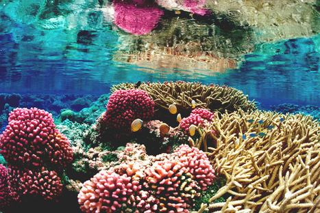 The End of Coral Reefs ? Around for 10 Million Years, Wiped Out in 100 | OUR OCEANS NEED US | Scoop.it