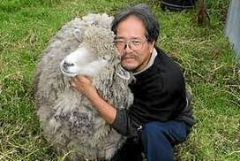 Shear determination against council costs sheep owner $200,000 | Unit 34 Legal Studies Issues | Scoop.it