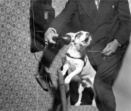 The Genius of Dogs: A Dimensional Definition of Human Intelligence | Brain Pickings | :: The 4th Era :: | Scoop.it