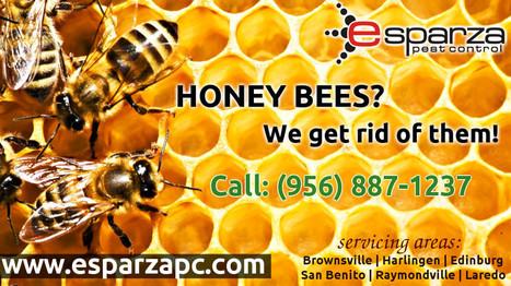 McAllen Professional Pest Control Services | Esparza Pest Control | Scoop.it