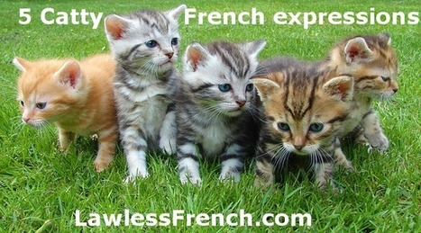 Catty French Expressions - Learn French at Lawless French   French and France   Scoop.it