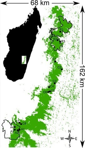Corridors for Biodiversity Conservation: A Forest Corridor in Madagascar | GarryRogers NatCon News | Scoop.it