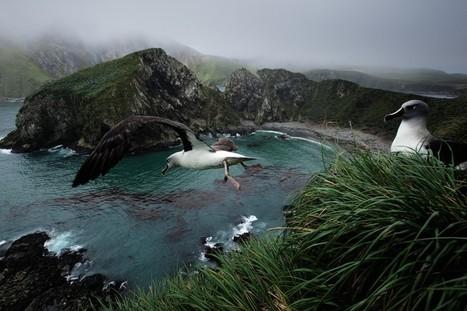 Reise-Bildband über Südgeorgien im Atlantik | Off the beaten track: Kreativ und cool | Scoop.it