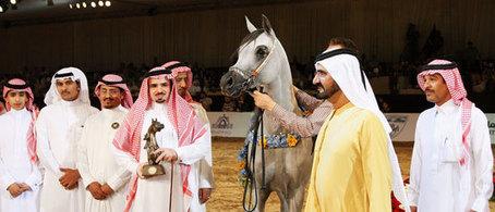 6-2012 | Arabian Horses | Scoop.it