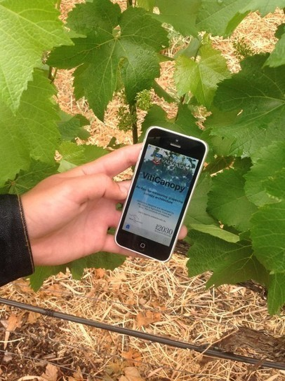 App launched to assess vineyard disease   Grande Passione   Scoop.it