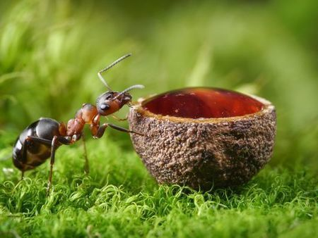 Boutique gin boasts all the flavor of 62 forest ants | Entomophagy: Edible Insects and the Future of Food | Scoop.it