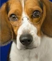 Consejos para perros mayores | Hotel Para Mascotas | Scoop.it