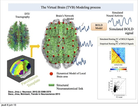 The Virtual Brain: a simulator of primate brain network dynamics | Network science to explore the brain | Scoop.it