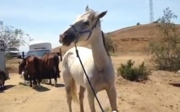 Tragic Discovery: 12 Starving Horses And Skeletal Remains | Nature Animals humankind | Scoop.it