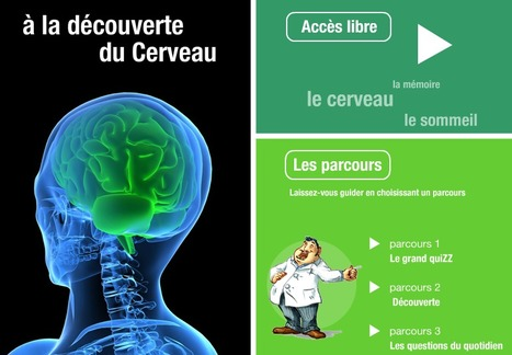 A la découverte du Cerveau | psychologie | Scoop.it