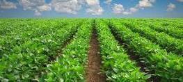 L'Union africaine invitée à investir dans l'agriculture | Chimie verte et agroécologie | Scoop.it