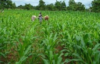 Soutenir l'agriculture paysanne, une mission d'avenir | Questions de développement ... | Scoop.it