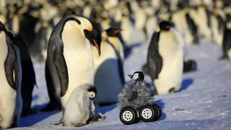 Baby robot penguin fools the real thing, all to protect the species | Heron | Scoop.it