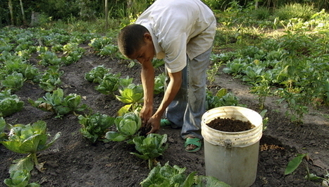 Thinking beyond organics for safe food and water | Organic News & Devon's Worldviews | Scoop.it