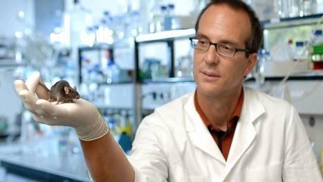 Dopage génétique | Futurs en devenir...monde du travail, transhumanisme, idéologies... | Scoop.it