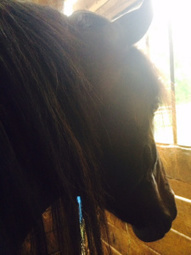 """Poem of the Week: """"The Horse's Head"""" By Brendan Kennelly   The Irish Literary Times   Scoop.it"""