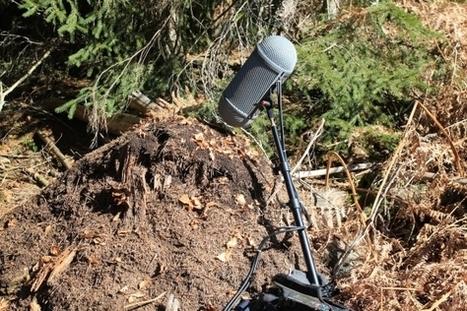 Murmure microscopique - Chants Insectes Lorraine Vosges - Marc Namblard | DESARTSONNANTS - CRÉATION SONORE ET ENVIRONNEMENT - ENVIRONMENTAL SOUND ART - PAYSAGES ET ECOLOGIE SONORE | Scoop.it