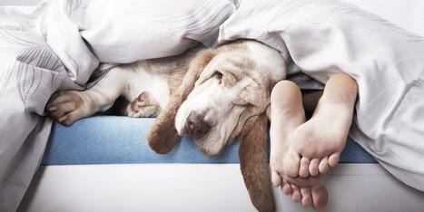 Dormir avec vos animaux n'est vraiment pas une bonne idée | CaniCatNews-actualité | Scoop.it