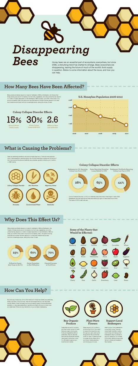 Visualistan: Disappearing Bees [Infographic] | Health | Scoop.it