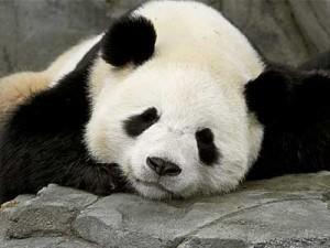 Qualité de contenu web et mise à jour Panda (algorythme Google)  rédaction web   Ecrire Web   Scoop.it