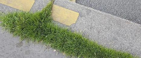 Outils d'identification | Sauvages de ma Rue | ville et jardin | Scoop.it
