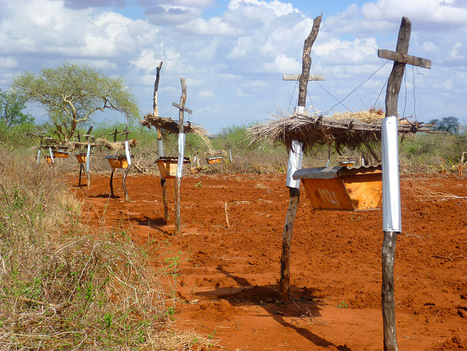Beehive Fences in East Africa Protect Farms from Elephants | Confidences Canopéennes | Scoop.it