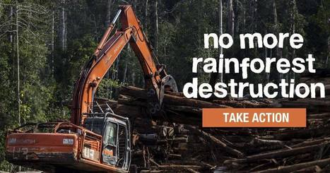 Office Choice and Office National: stop buying from rainforest destroyers! | GarryRogers NatCon News | Scoop.it