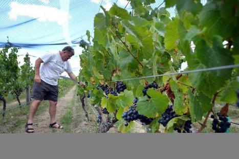 Canada Says Wines Sold In Its Domestic Market Are Safe | Autour du vin | Scoop.it