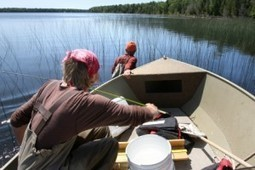 CMU leads $10 million grant to preserve Great Lakes coastal wetlands - Midland Daily News   Fish Habitat   Scoop.it
