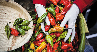 The Gut-Wrenching Science Behind the World's Hottest Peppers | Diary of a serial foodie | Scoop.it