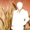 Commodity Systems Boom in Agribusinesses | Harrington Starr | Commodities Market Space | Scoop.it