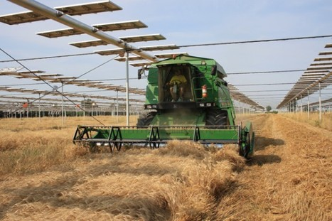 The Agrovoltaic system, solar energy encounters agriculture | Energy public policy management | Scoop.it