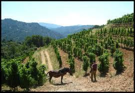 Appel on Wine: Throw yourself in front of a Priorat | Vitabella Wine Daily Gossip | Scoop.it