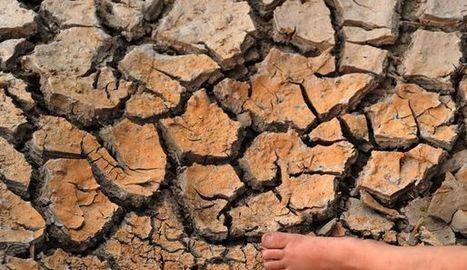 Une transformation profonde de l'agriculture nécessaire face au réchauffement (FAO) - L'Express | Le Fil @gricole | Scoop.it