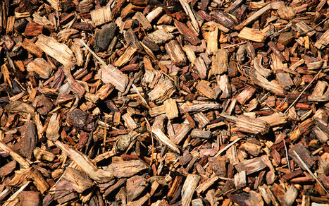 Should we use fresh or composted bark chippings in the garden? | Gardening | Scoop.it