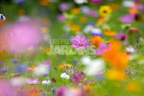 Sélection de végétaux pour une ambiance prairie     Le jardin par Maison Blog   Scoop.it
