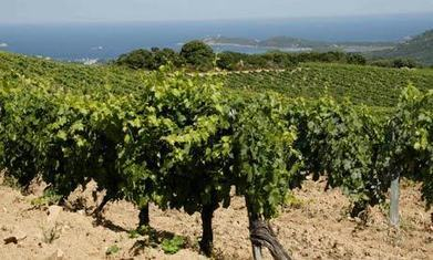 A wine tour of Corsica: top 10 guide | Travel | Scoop.it