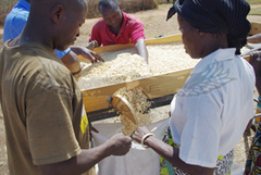 ICTs: helping Zambian farmers make most of produce | e-Agriculture | E-Agriculture | Scoop.it