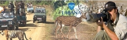Get green by getting through the lush greenery with India wildlife tours | Adventure Tours | Scoop.it