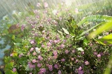 Ten Ways to Conserve Water in your Garden   no waste   Scoop.it