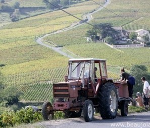 Beaujolais forges ahead with classification | In The Vineyard | Scoop.it