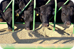 Scientific studies conclude GMO feed causes organ disruption in animals | Food issues | Scoop.it