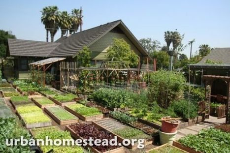 USA: Une famille fait pousser 3 tonnes de nourriture bio par an dans son jardin(Vidéo) - Re-informe.com | Société | Scoop.it